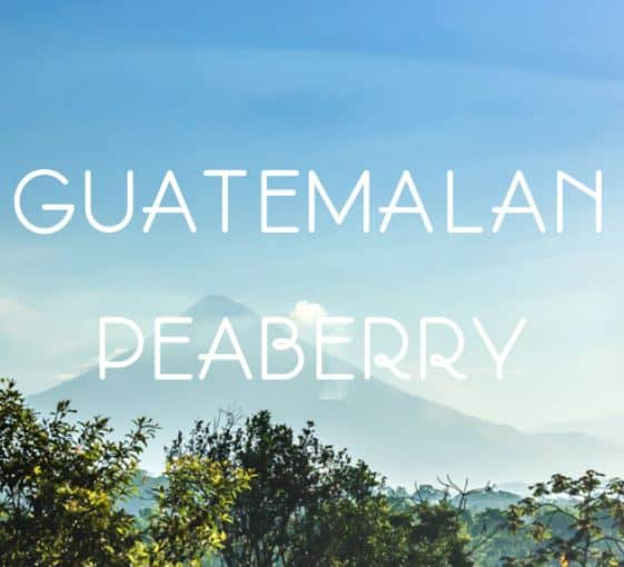 guatemalan peaberry coffee beans