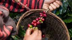 what is organic coffee