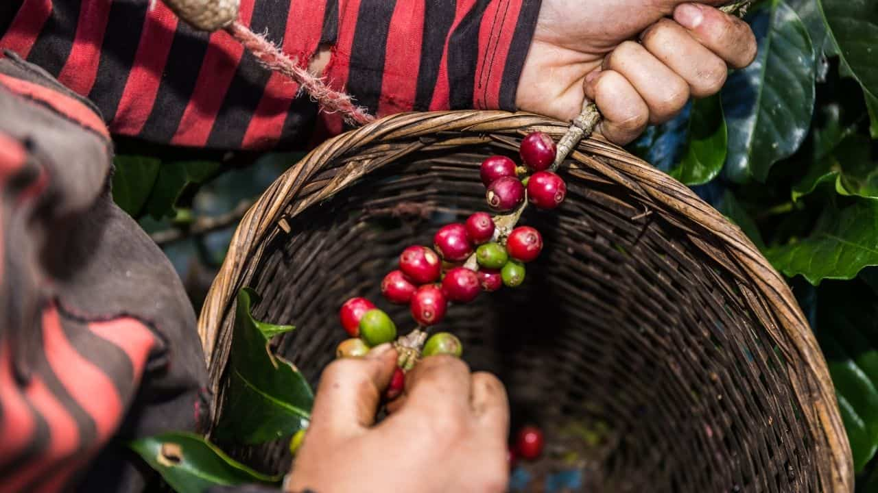 best organic coffee beans for espresso (1)